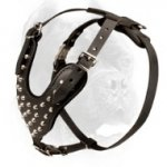 Studded Leather Cane Corso Harness for Daily Walking