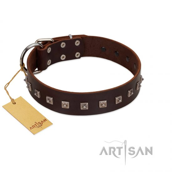 """Kingly Grace"" FDT Artisan Brown Leather Cane Corso Collar with Silver-like Dotted Studs"