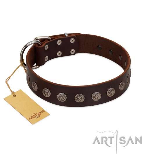 """Starry-Eyed"" Best Quality FDT Artisan Brown Designer Leather Cane Corso Collar with Small Plates"