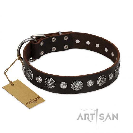 """Victory Ode"" FDT Artisan Brown Leather Cane Corso Collar with Silver-like Plated Decorations"