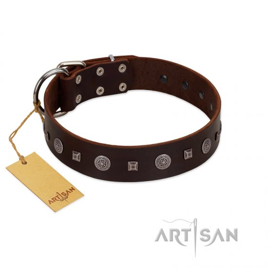 """Pure Sensation"" Exclusive FDT Artisan Brown Leather Cane Corso Collar with Fancy Brooches and Studs"
