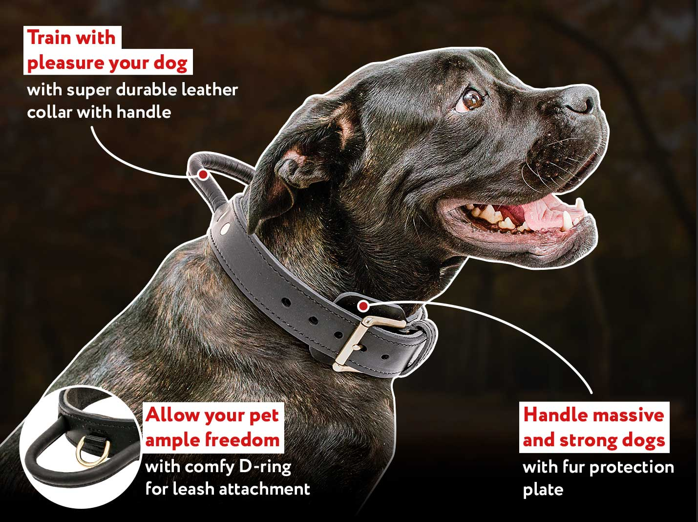 2 ply Leather Agitation Dog Collar with Durable Handle for CANE CORSO