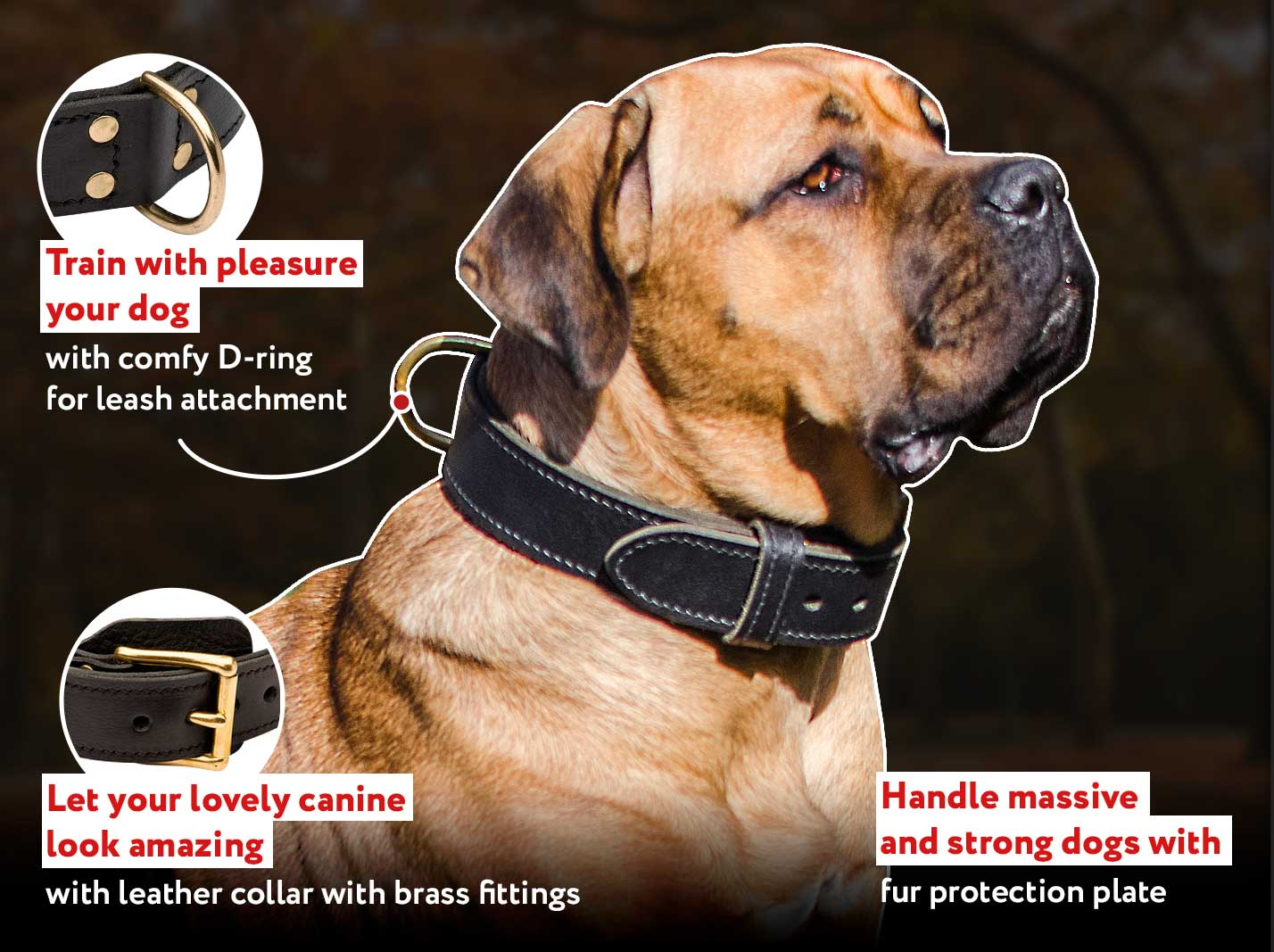 Two ply leather agitation dog collar for CANE CORSO