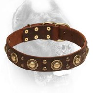 Attractive Fancy Design Leather Cane Corso Collar