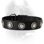 Wide Nylon Dog collar Decorated with Silver Looking Conchos