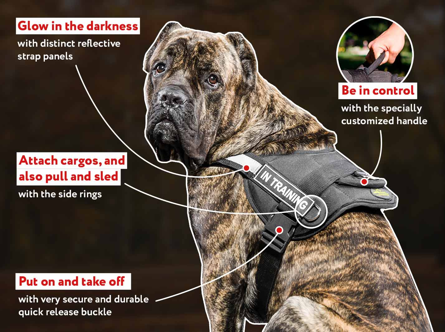 Multifunctional Nylon Cane Corso Harness