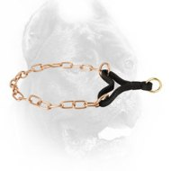 Gold-Like Curogan Cane Corso Martingale Collar for Better Control