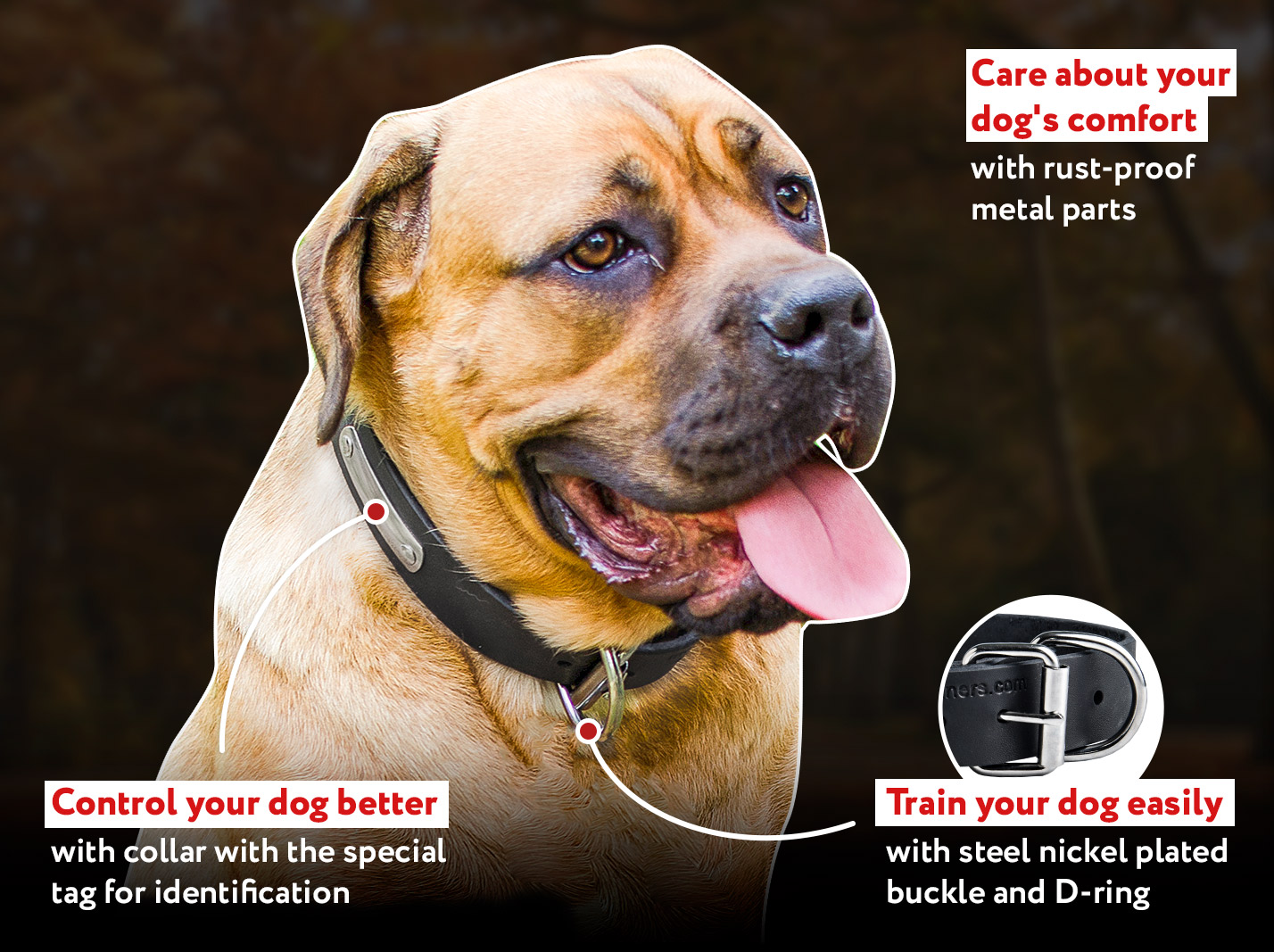 Leather Canine Collar with ID Tag for CANE CORSO
