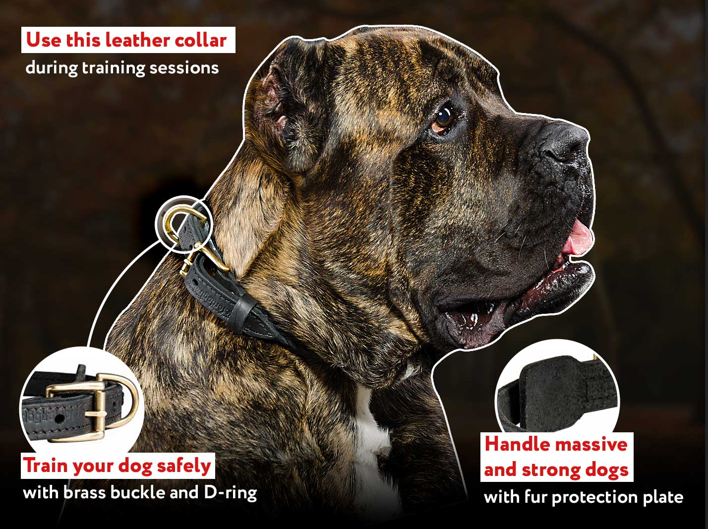 Stylish Braided Leather Cane Corso Collar for Showy Walks