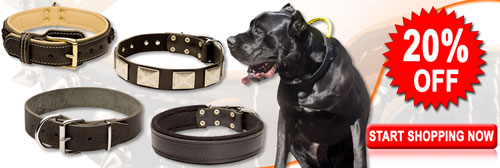 Buy Today High Quality Exclusive Cane Corso Collars