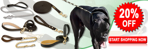 Reliable Walking Cane Corso Leashes