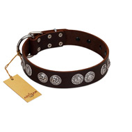 """High and Mighty"" FDT Artisan Classy Brown Leather Cane Corso Collar with Embellished Brooches"