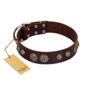 """Choco Brownie"" FDT Artisan Brown Leather Cane Corso Collar Adorned with Silver-Like Conchos"