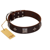 """Cold Star"" Designer FDT Artisan Brown Leather Cane Corso Collar with Silver-Like Adornments"