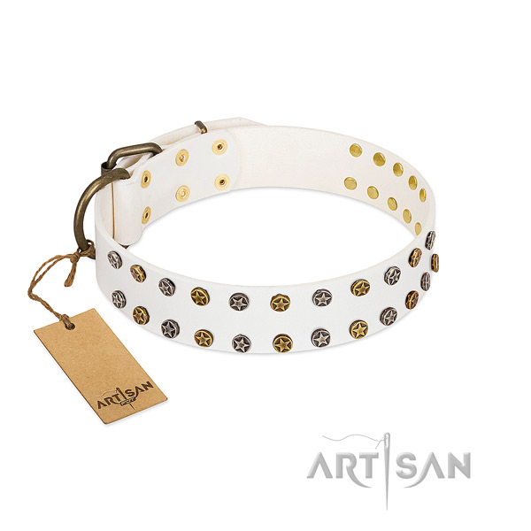 Stunning full grain leather dog collar with corrosion proof studs