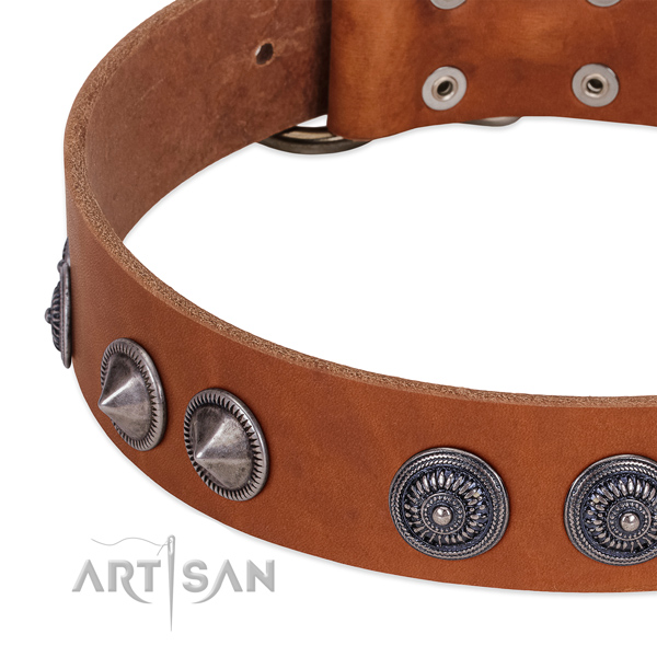 Impressive leather dog collar with rust-proof hardware