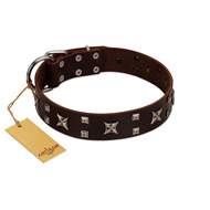 """Bigwig Woof"" FDT Artisan Brown Leather Cane Corso Collar with Chrome Plated Stars and Square Studs"