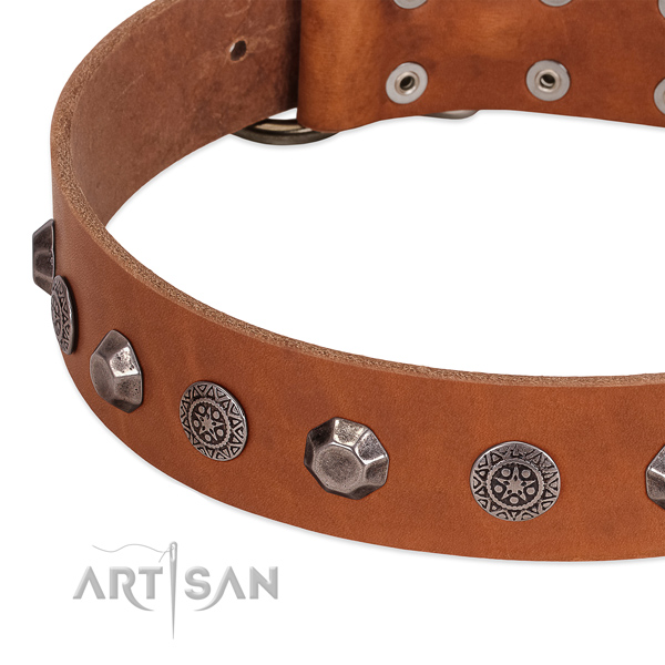 Exceptional leather collar for your four-legged friend everyday walking
