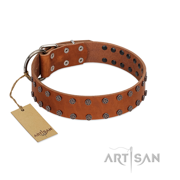 Stylish walking full grain genuine leather dog collar with stunning adornments