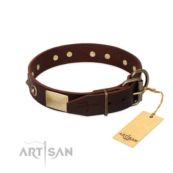 Rust resistant decorations on everyday walking dog collar