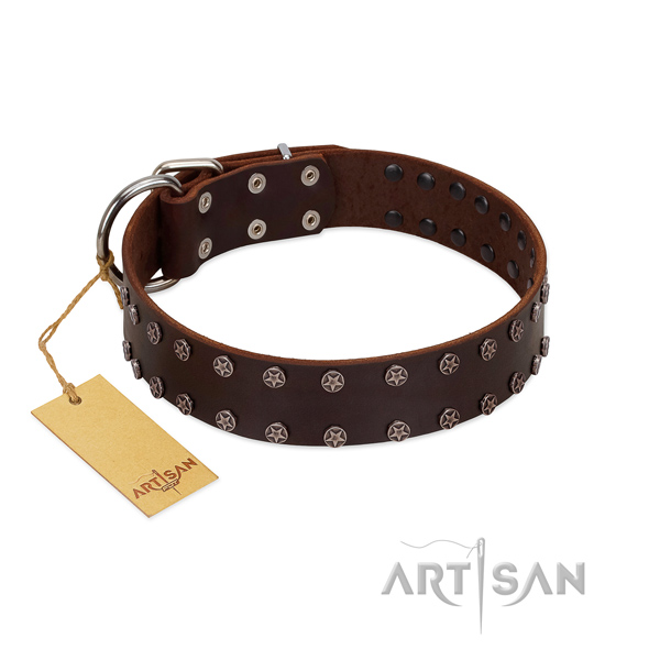 Everyday walking full grain genuine leather dog collar with designer embellishments