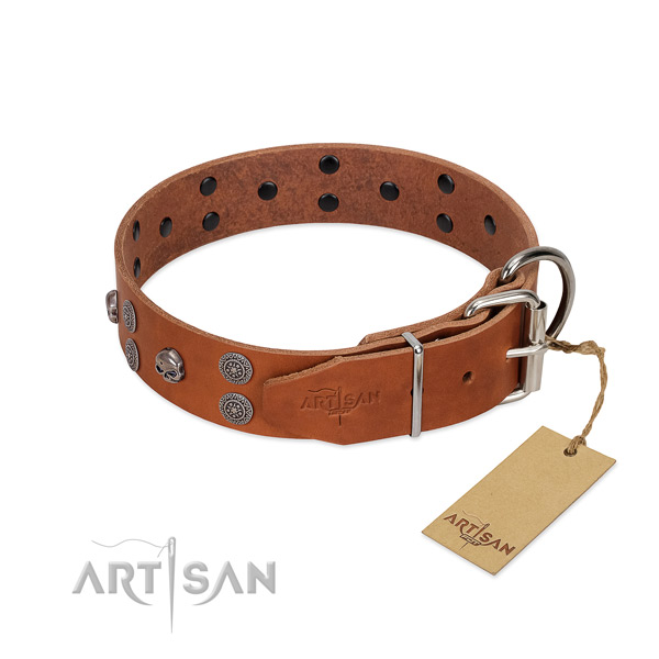 High quality leather dog collar with adornments for everyday use