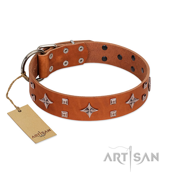 Stunning leather collar for your dog daily walking