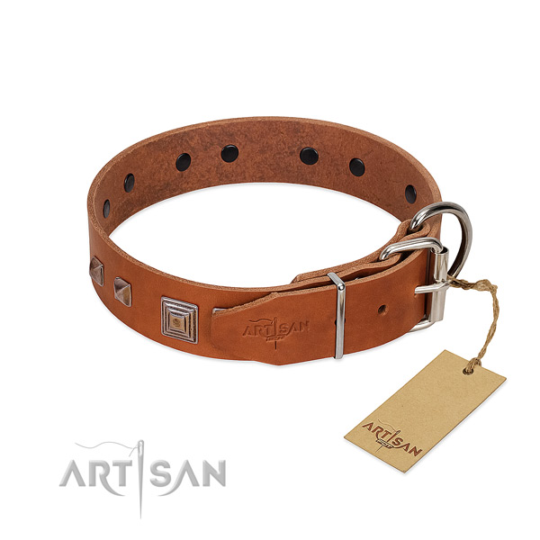 Comfy wearing natural leather dog collar with exceptional embellishments