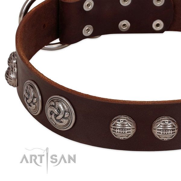 Strong fittings on full grain genuine leather collar for stylish walking your pet