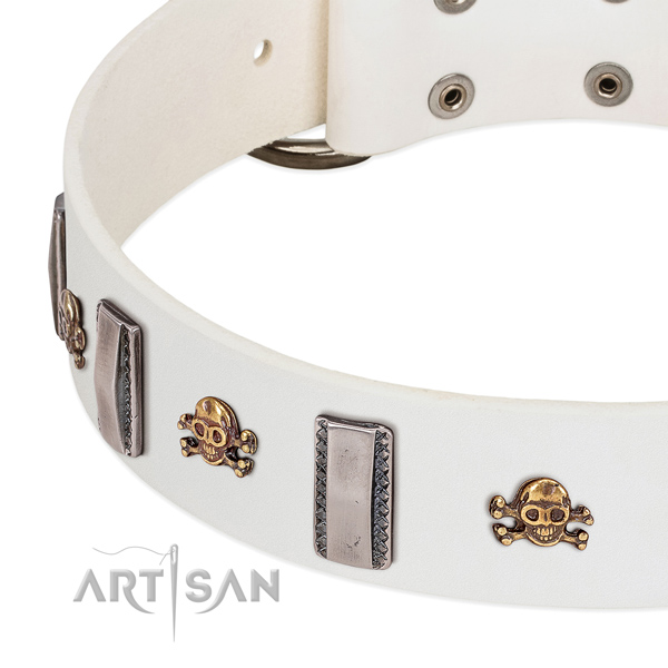 Fashionable studs on full grain leather dog collar for fancy walking