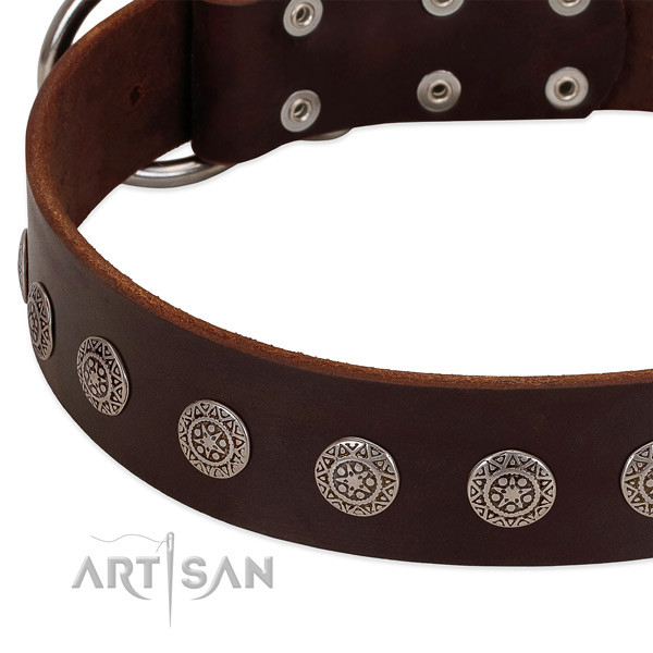 Remarkable dog collar of natural leather with adornments