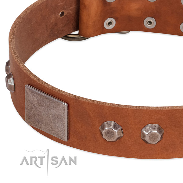 Walking top notch full grain leather dog collar
