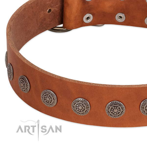 Extraordinary collar of leather for your four-legged friend