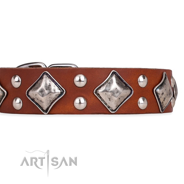 Full grain leather dog collar with stylish durable embellishments