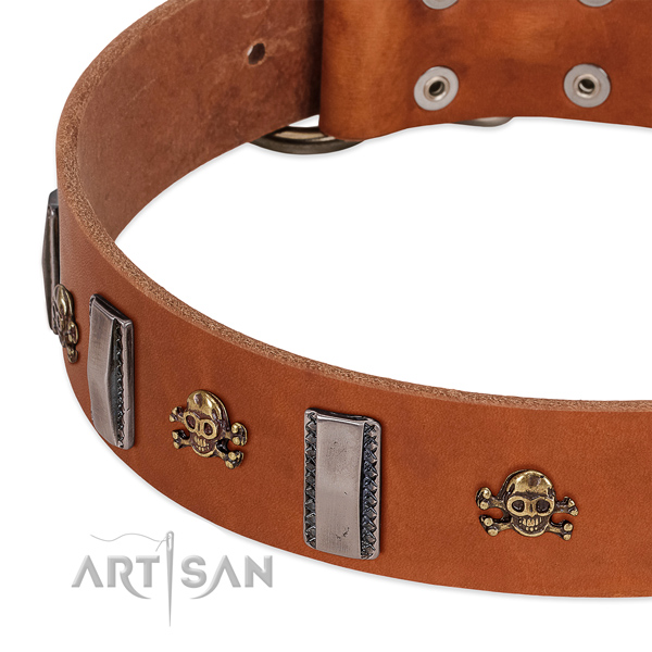 Top notch decorations on genuine leather dog collar for daily use