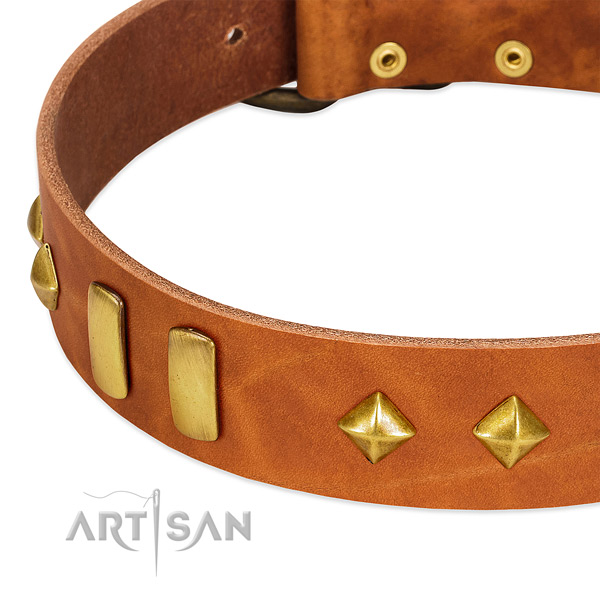 Walking full grain leather dog collar with remarkable studs