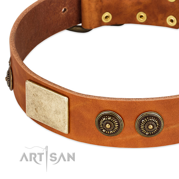 Studded dog collar made for your stylish doggie