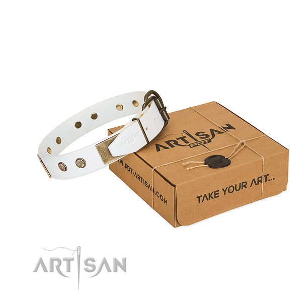 Reliable traditional buckle on dog collar for walking