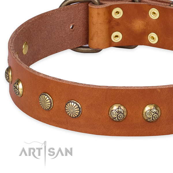 Genuine leather collar with rust-proof hardware for your impressive four-legged friend