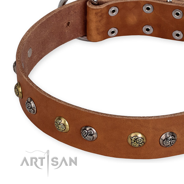 Full grain leather dog collar with exceptional rust-proof studs