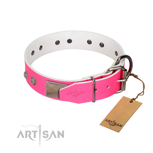 Daily walking dog collar of natural leather with extraordinary studs