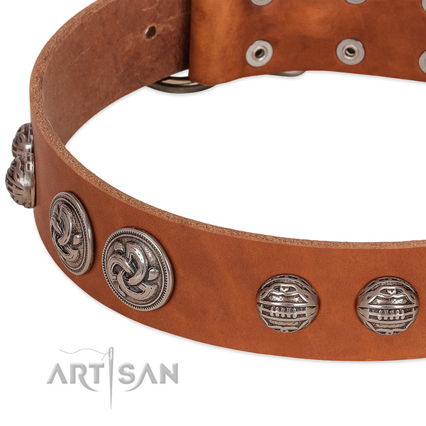 Rust-proof buckle on natural genuine leather collar for walking your dog