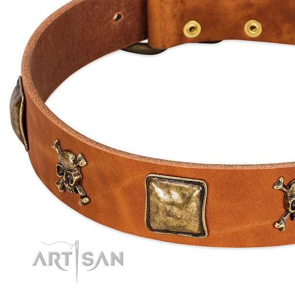 Trendy studs on leather collar for your four-legged friend