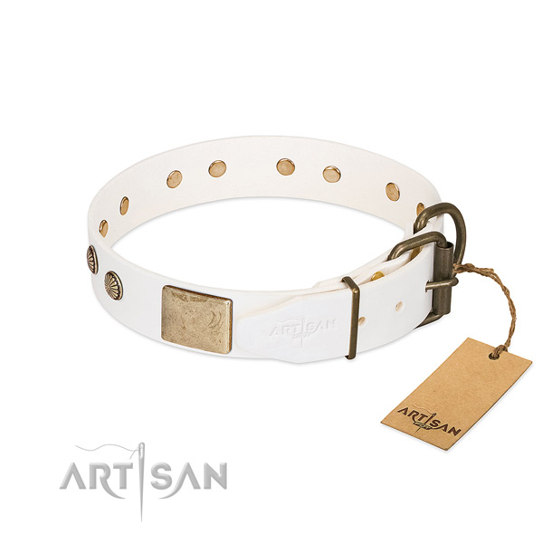 Strong hardware on stylish walking dog collar