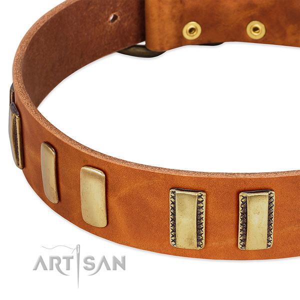 Best quality full grain natural leather dog collar with adornments for walking