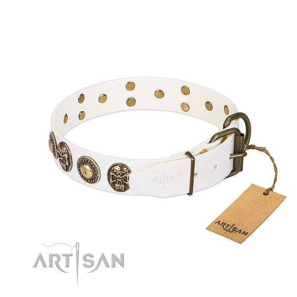 Rust resistant studs on stylish walking dog collar
