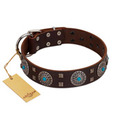 """Hypnotic Stones"" FDT Artisan Brown Leather Cane Corso Collar with Chrome Plated Brooches and Square Studs"
