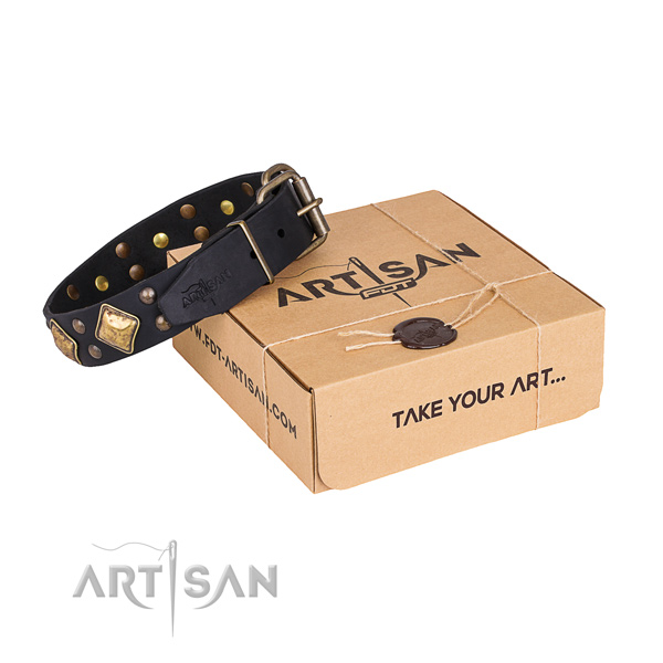 Daily use dog collar with Impressive rust-proof embellishments
