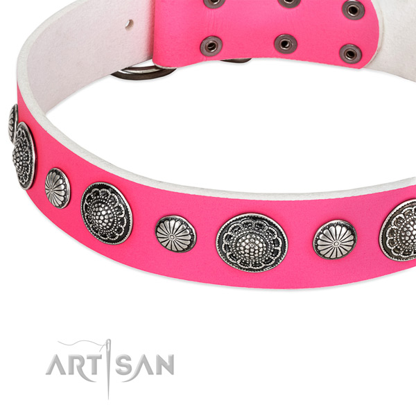 Natural leather collar with corrosion resistant hardware for your attractive canine