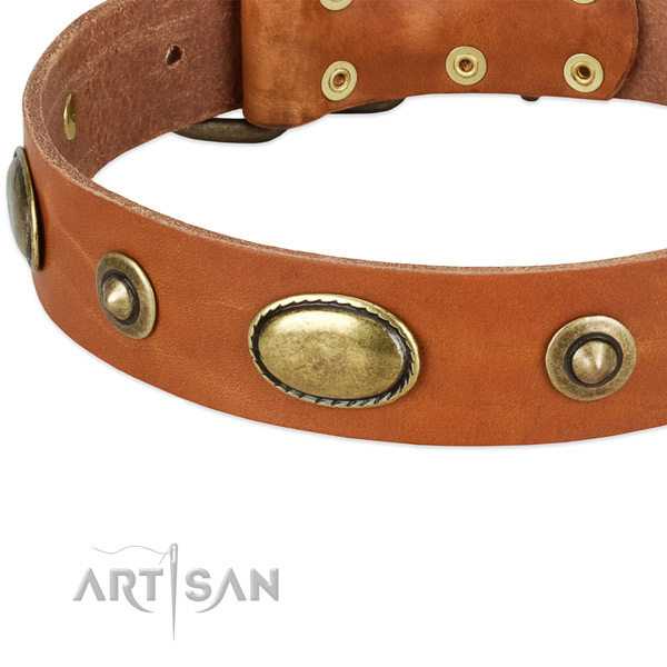 Rust-proof adornments on natural leather dog collar for your canine